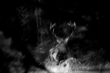 Photo © Christophe Salin
